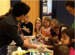 Volunteer teaching elementary students about neuroanatomy using real animal brains.