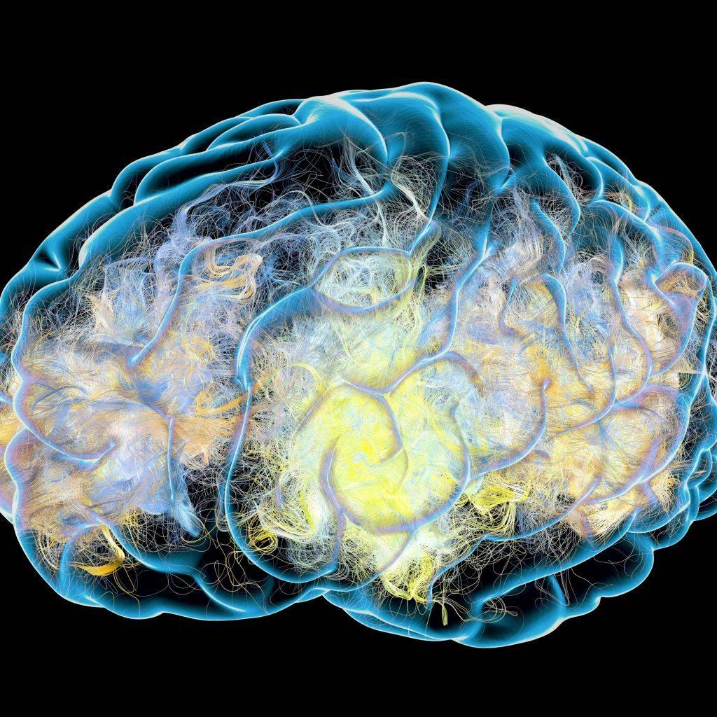 صورة ثلاثية الأبعاد توضح اتصالات المشبك في الدماغ