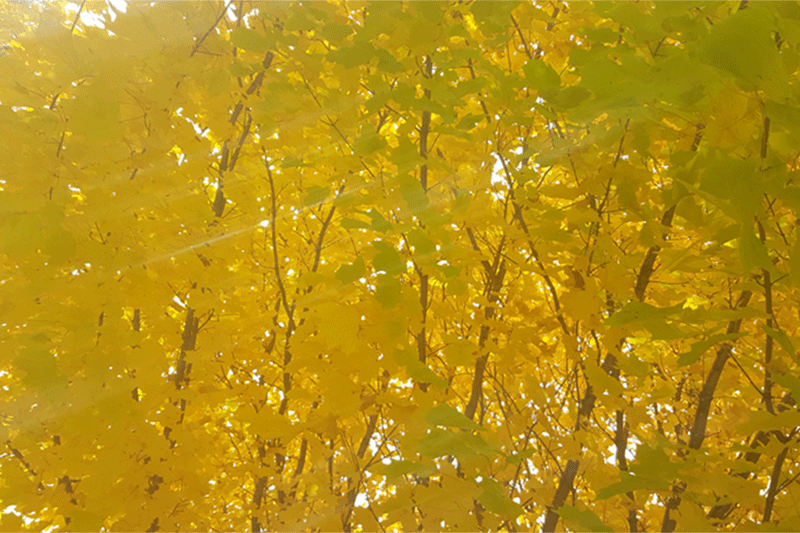 Fall-picture-of-leaves