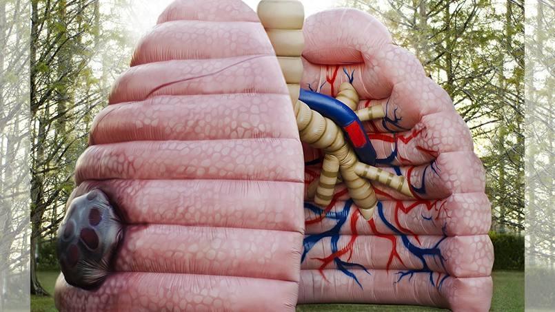 Mega Lung Display