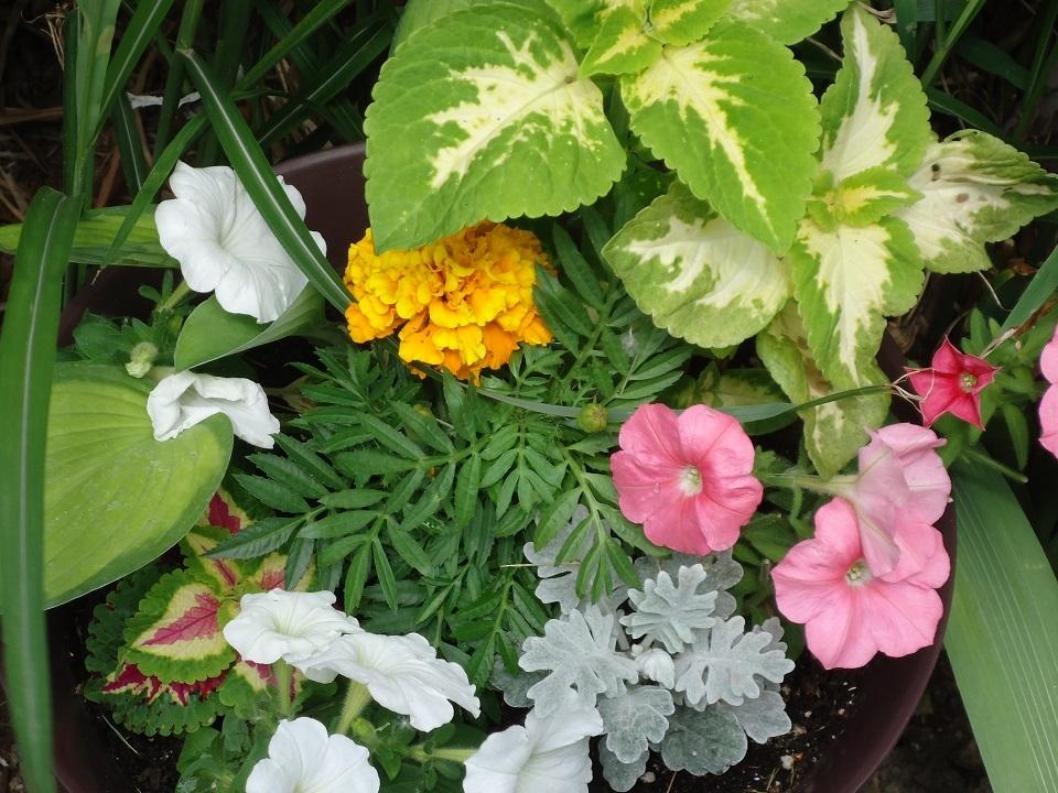 patio flowers 5