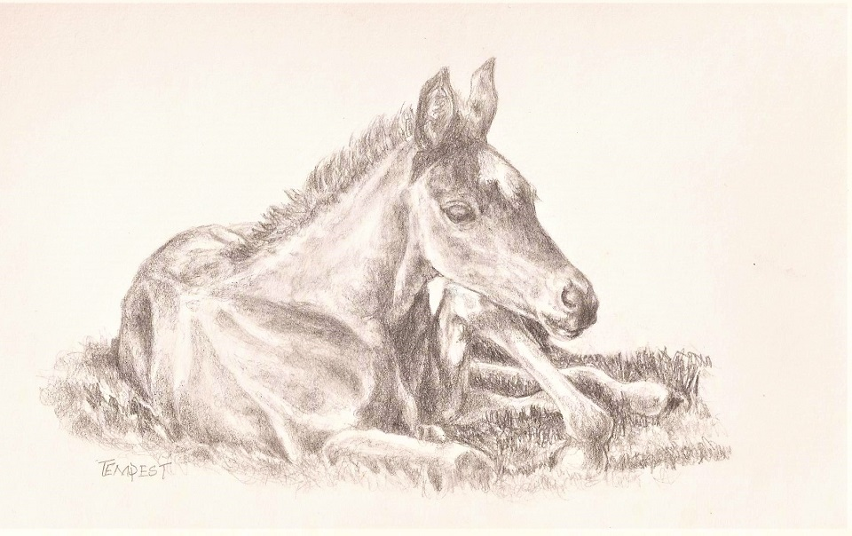 foal drawing 2018