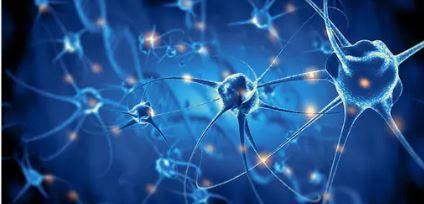 neuron in ink