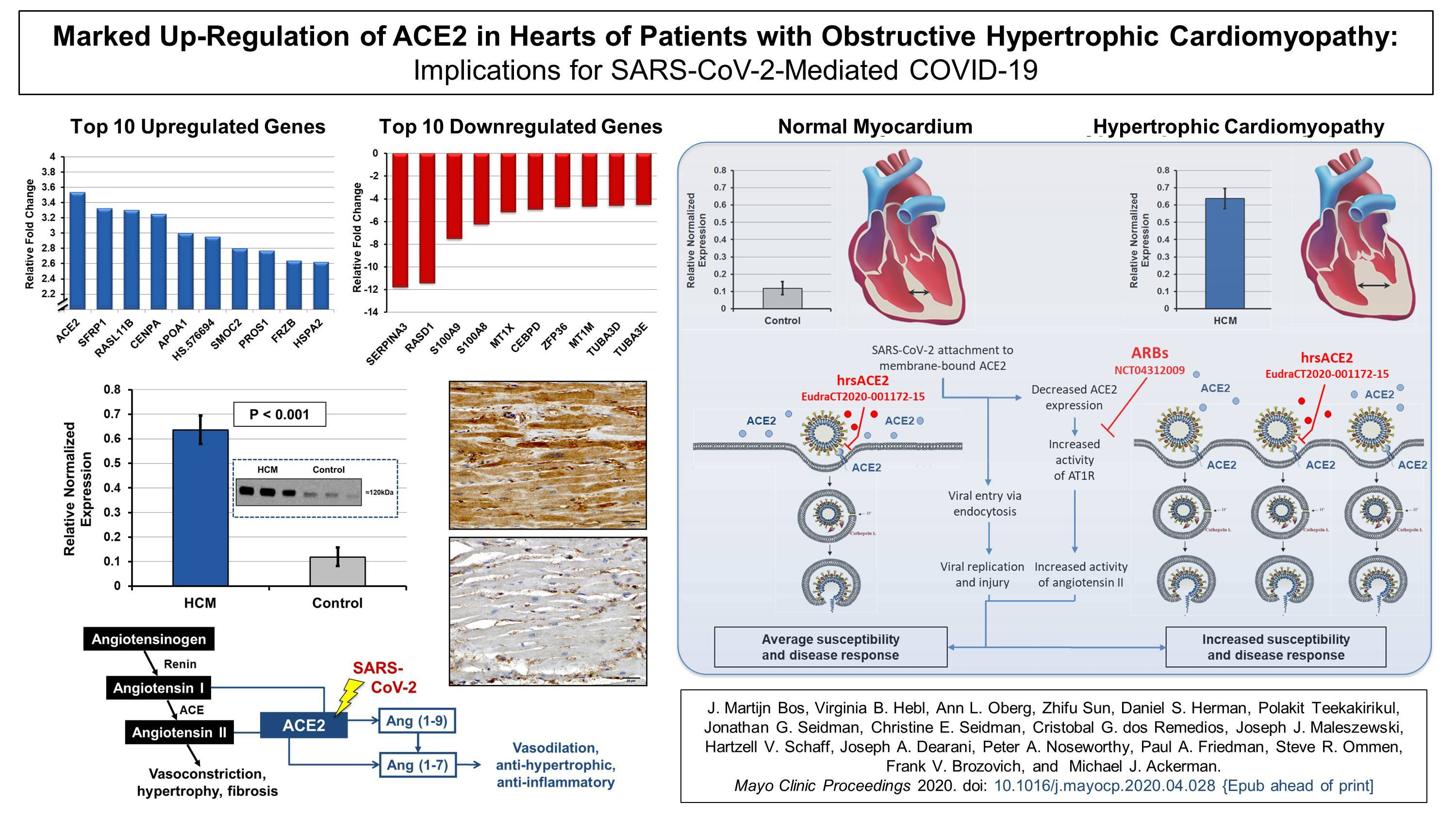 2020 - MCP - HCM - ACE2 and COVID - Summary Figure