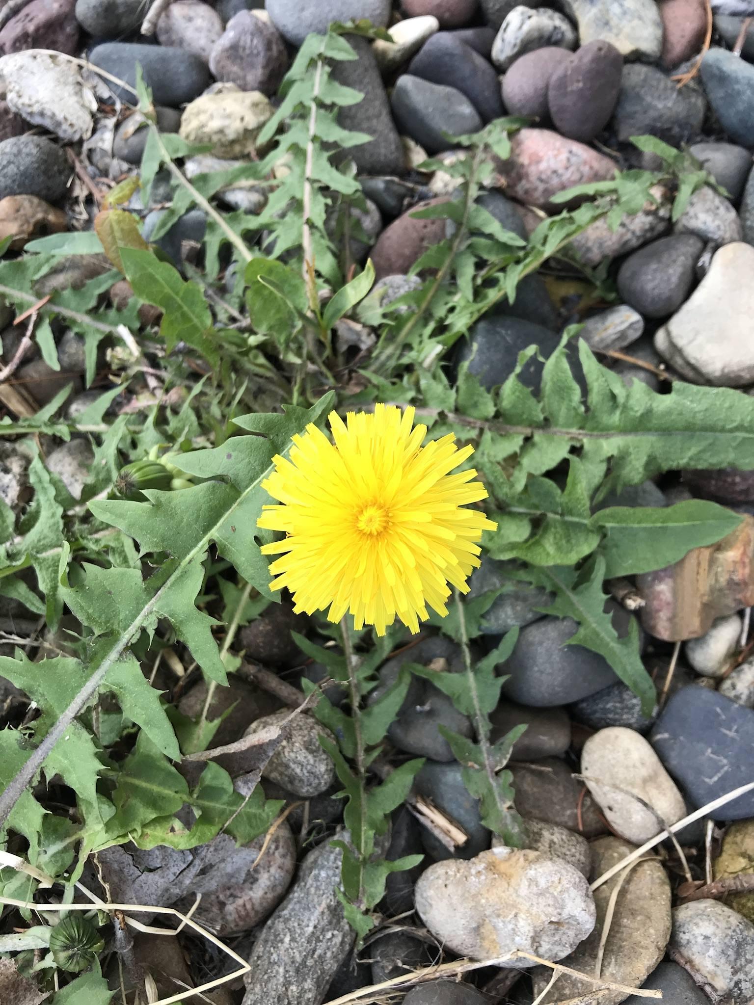 flowerchild65 (@flowerchild65)