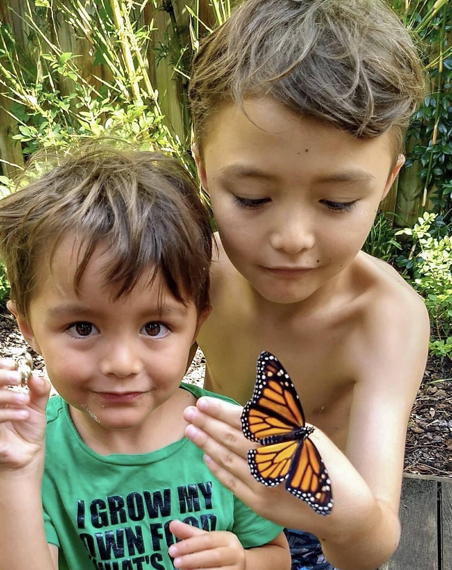 Oskarsson butterflies