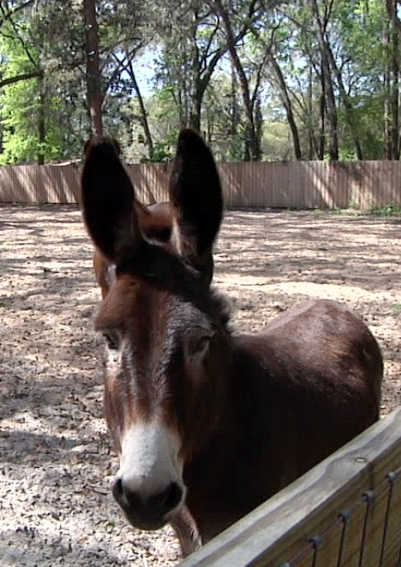 The Willingham family donkey, Slim, joined the family after their second diagnosis.