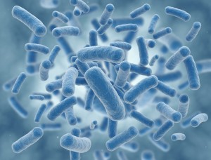close-up of bacteria illustration