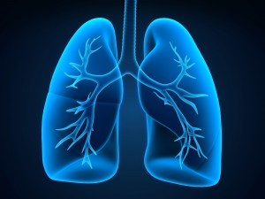 transparent view of the lung