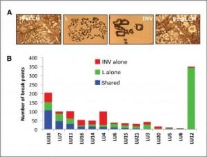 Imágenes de tejido congelado correspondiente a cáncer de pulmón