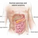 ilustración de páncreas y anatomía normales