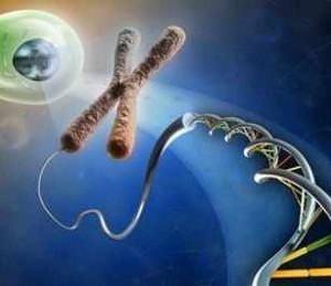 Imágenes con representaciones de citogenética