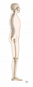 skeletal illustration of an entire side view of a body highlighting an ideal posture that has a neutral head, spine, pelvis, knees and feet