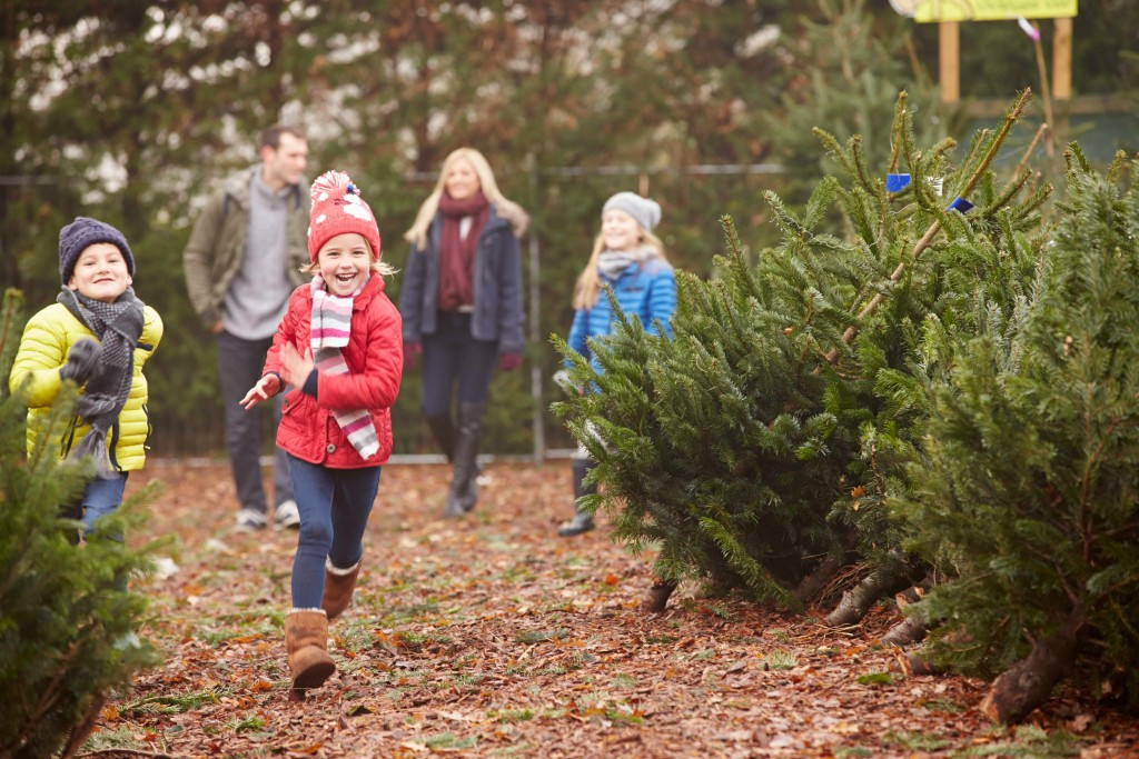 children running through a christmas tree lot with mom and dad in the background