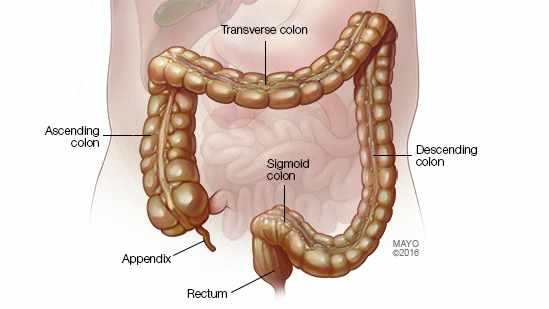 medical illustration of colon and rectum