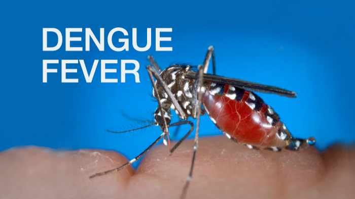 """dengue fever"" text on an image of a female Aedes albopictus mosquito"
