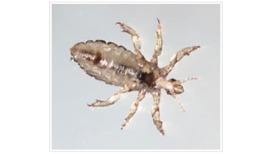 parasite from Parasite Wonders blog