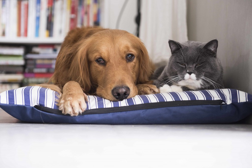 two pets, a dog and a cat, resting on a pet bed together