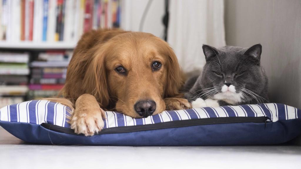 Un perro y un gato descansan juntos en una cama para mascotas