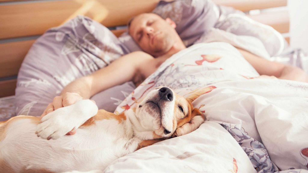 Un hombre duerme junto a su perro sobre las sábanas de la cama.