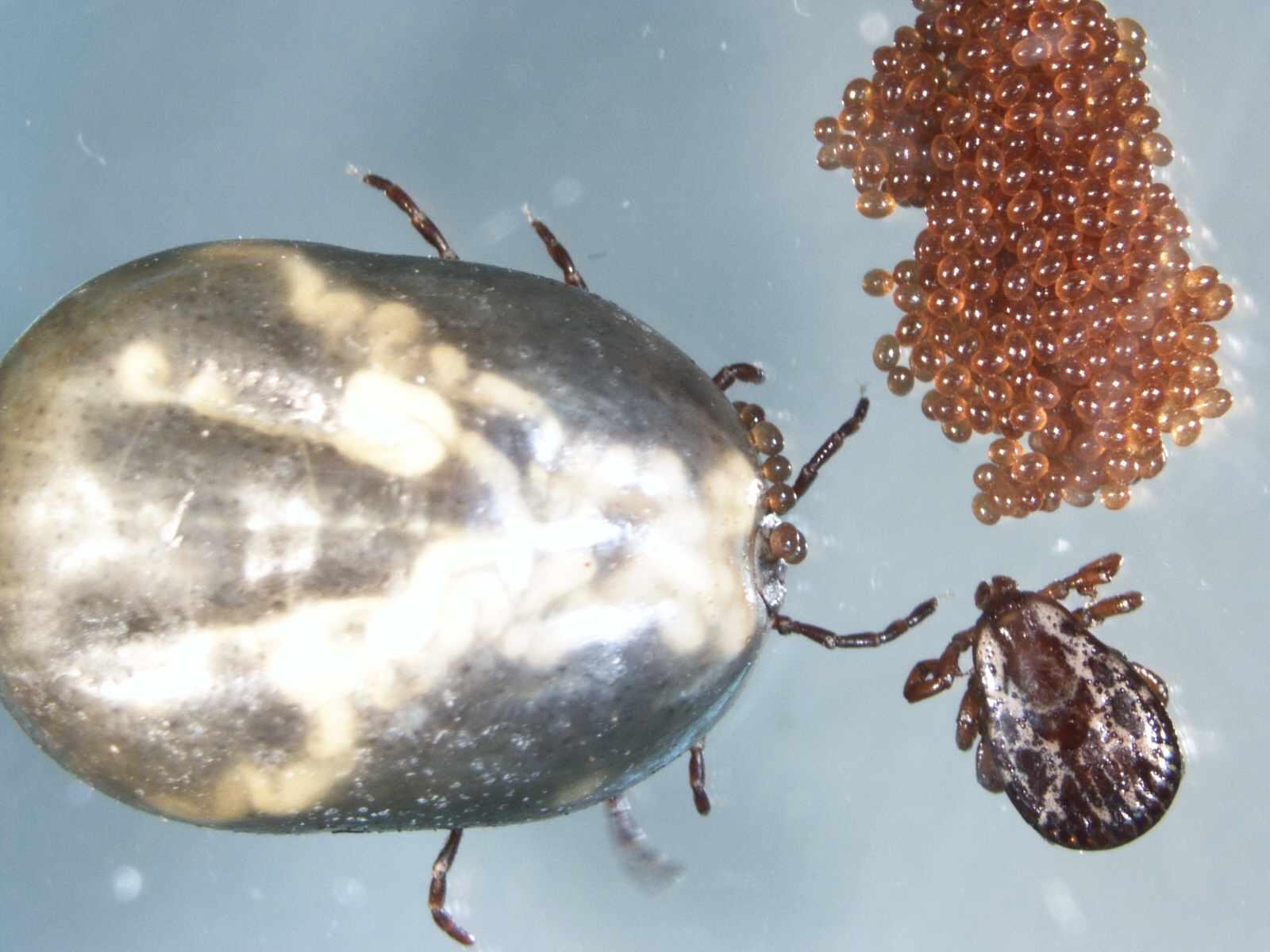 parasites from Parasite Wonders blog slide