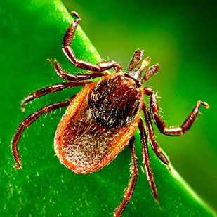 a close up of a tick on a blade of grass