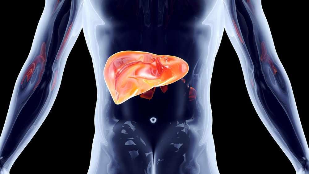 Ilustración anatómica del hígado