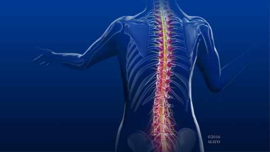 a medical illustration of a normal spine