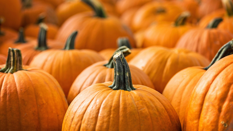 a close-up of a crowd of pumpkins