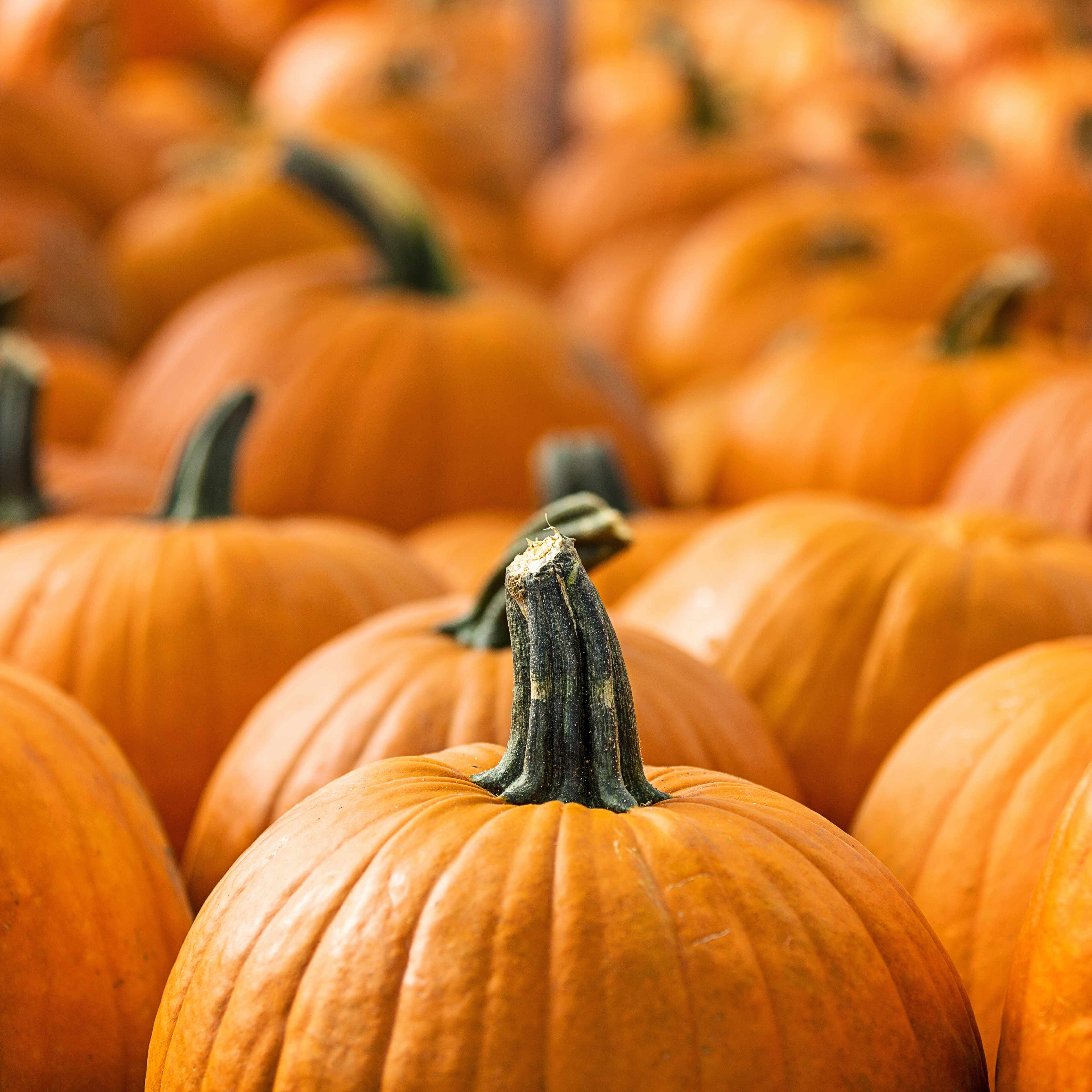 a close-up of a crowd of pumpkins