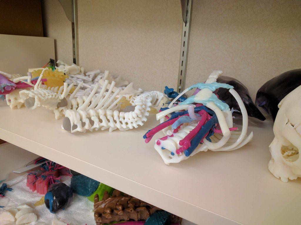 Un estante con varios modelos tridimensionales del grupo de Radiología