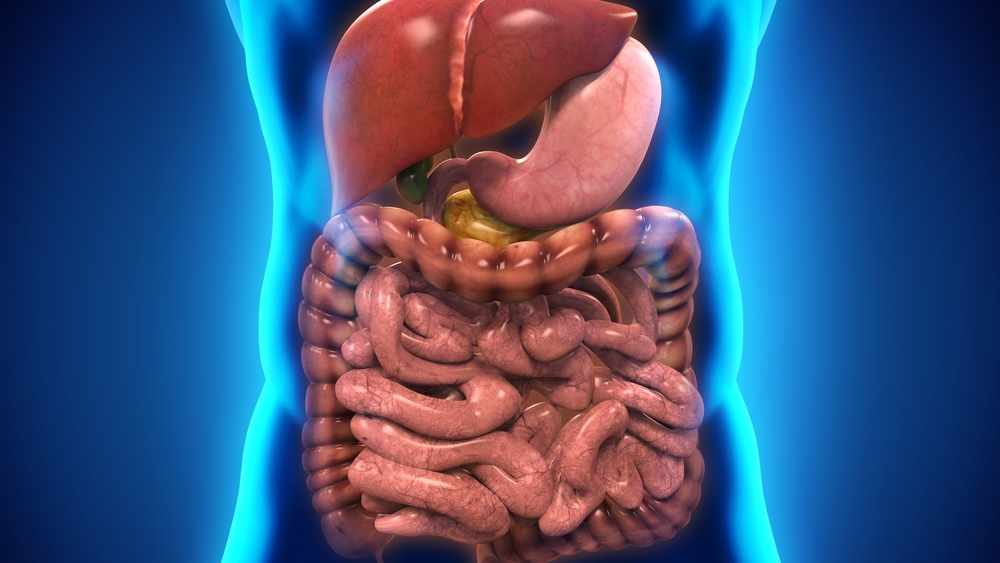 'Gut touch?' Mayo Clinic researchers discover important trigger for serotonin release