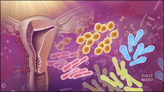 Illustration of vaginal microbes