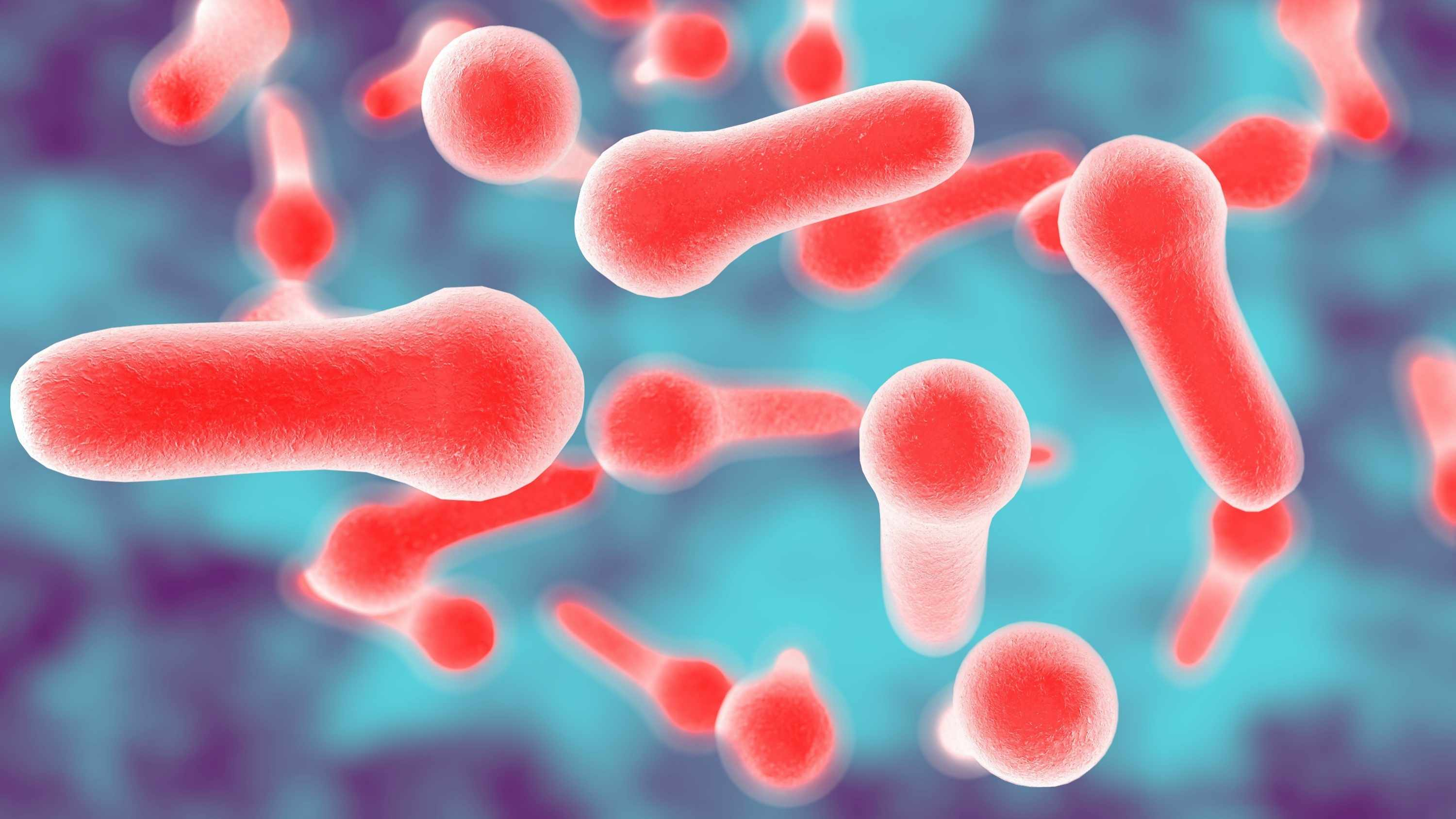 3D illustration of Clostridium bacteria which causes tetanus, botulism, gas gangrene and wound infection