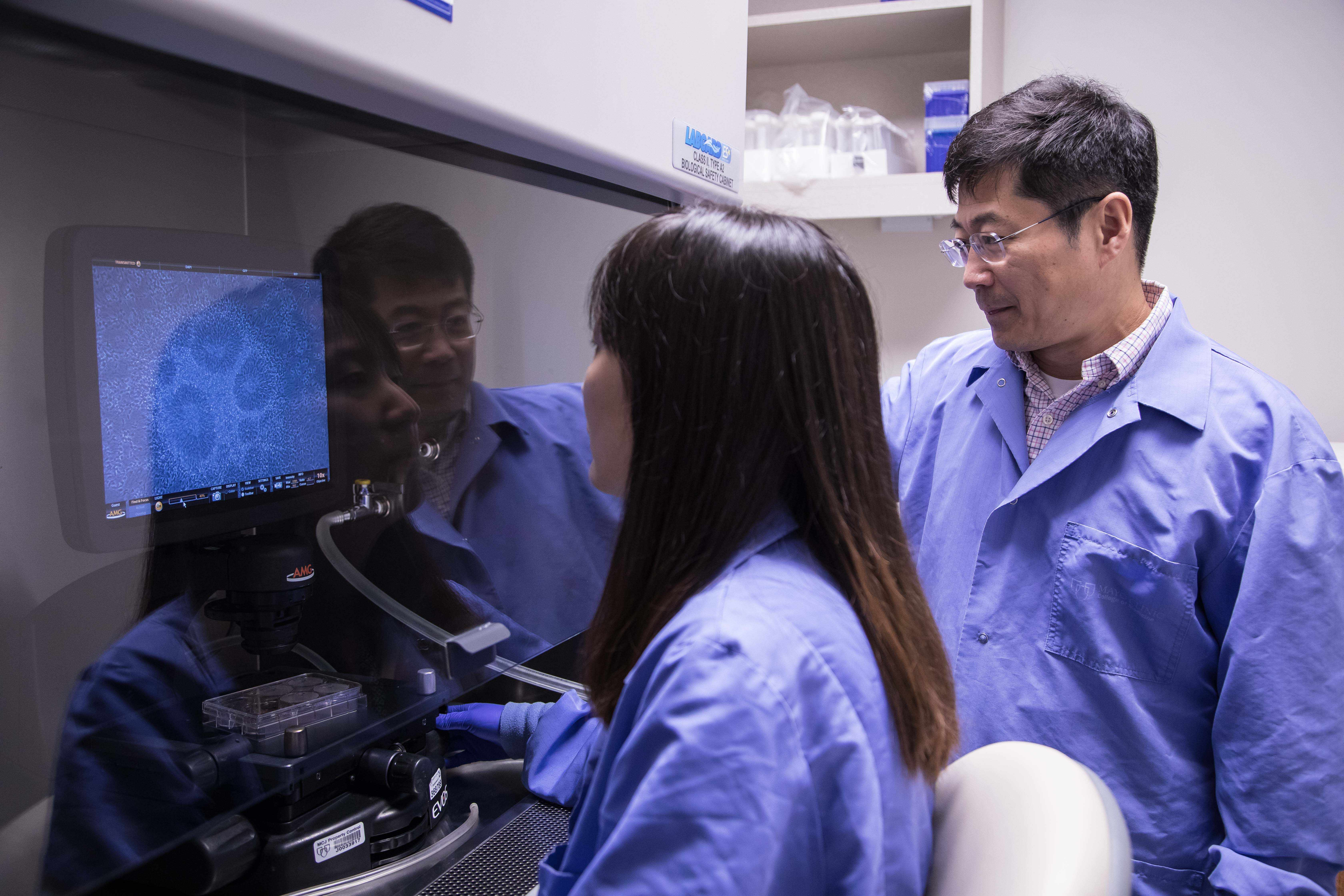 Dr. Bu and one of his associates reviews stem cells in the new neurodegenerative lab on Florida's campus.