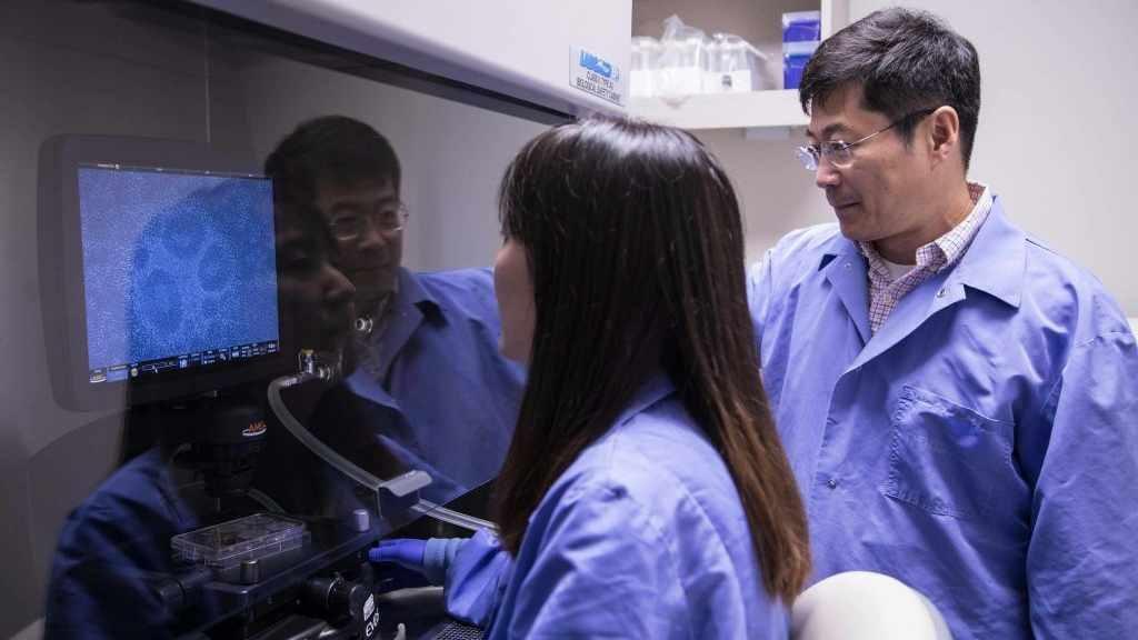 Dr. Guojun Bu y colega en el laboratorio de investigación