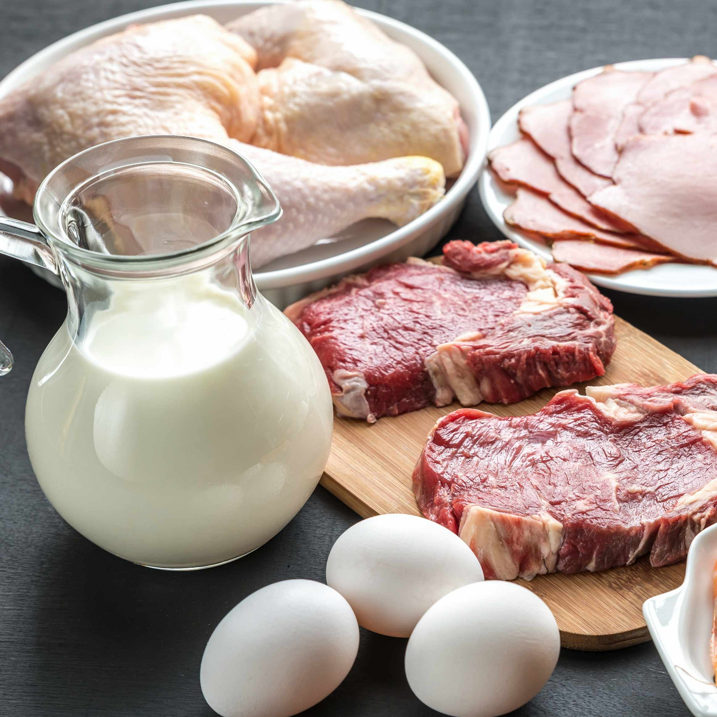 Protein diet of raw meats, fish, eggs and milk products on plates