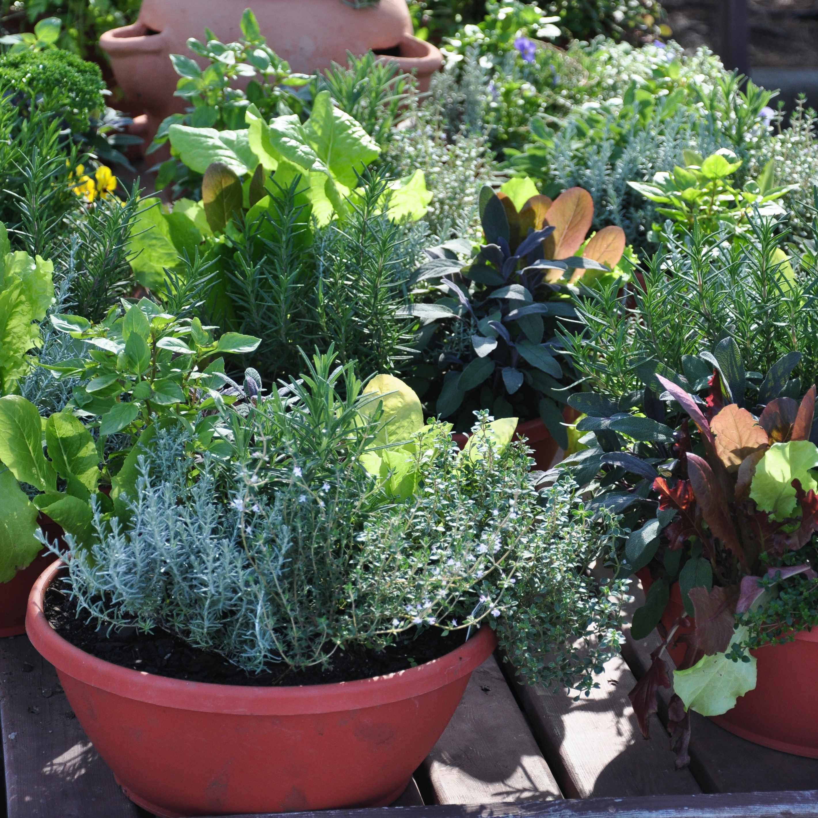 a container garden with plants and pots of fresh vegetables and herbs