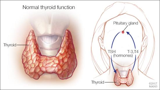What is Hashimoto\'s disease? – Mayo Clinic News Network