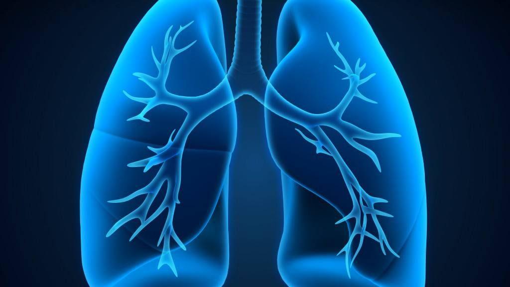 Ilustración médica de los pulmones