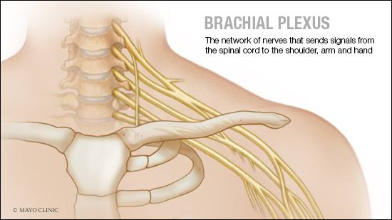 medical illustration of brachial plexus