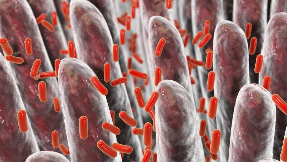 Ilustración tridimensional del intestino humano con las bacterias intestinales