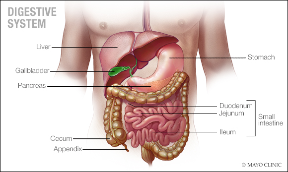 crohn\u0027s disease is an inflammatory bowel disease \u2013 mayo clinic newscrohn\u0027s disease causes inflammation of your digestive tract, which can lead to abdominal pain, severe diarrhea, fatigue, weight loss and malnutrition