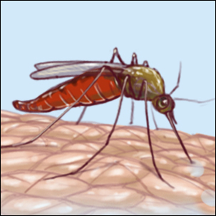 a medical illustration of a mosquito transmitting malaria
