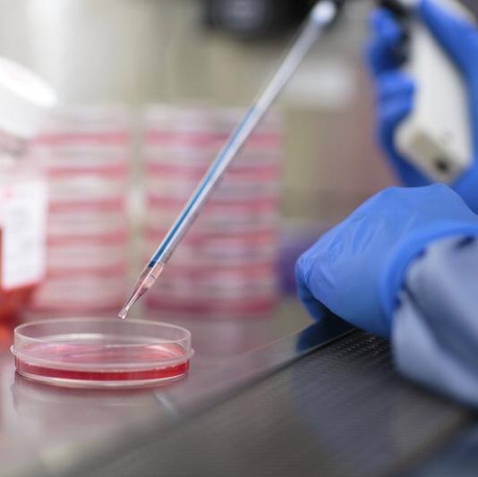 再生医学实验室中心,研究员将液滴放入培养皿中。