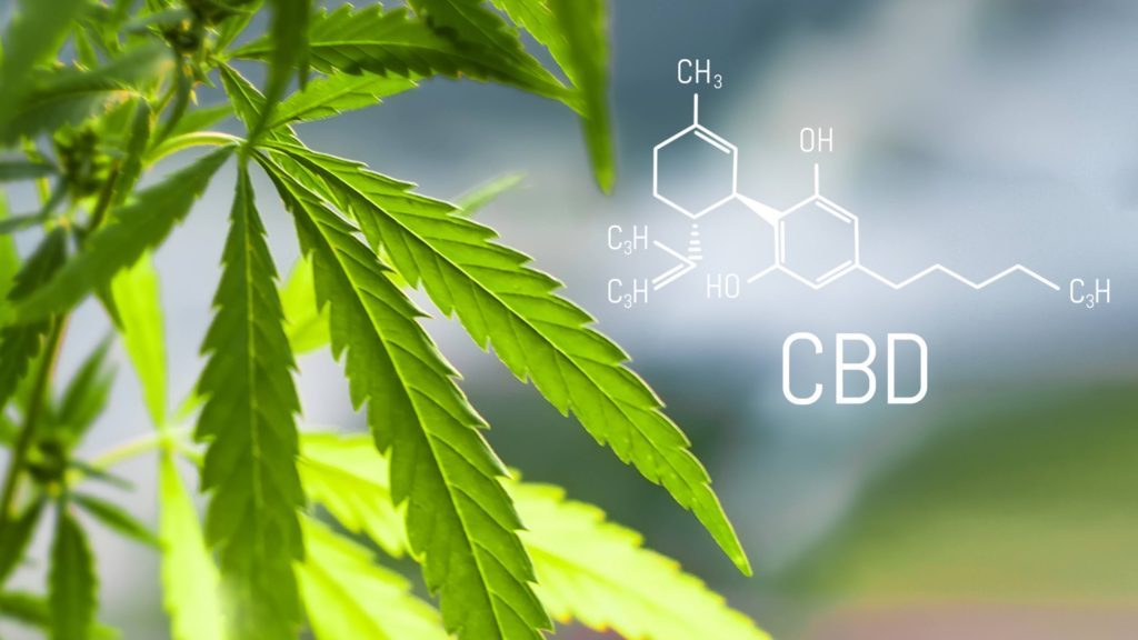 Cannabis of the formula CBD cannabidiol. Concept of using marijuana for medicinal purposes