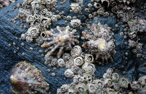 Science Saturday: Inspiration from the sea for improved wound closure