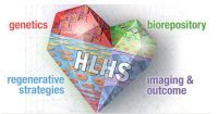 Research for Infants with HLHS Moves Forward