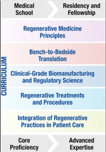 "Fundamental principles of the ""regenerative medicine and surgery course"" curriculum are introduced early in medical school training, and expanded in residency and clinical fellowship, allowing for core proficiency to develop into advanced expertise of the next-generation specialized workforce."