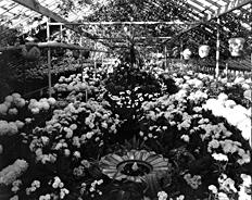 The greenhouse at Mayowood, circa 1920s